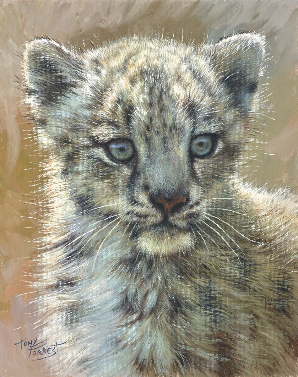Snow Leopard Cub by tony forrest -  sized 10x12 inches. Available from Whitewall Galleries